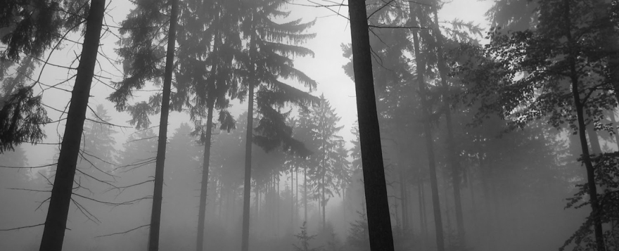 fearful trees